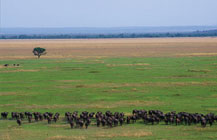 Grumeti Reserve, Tanzania