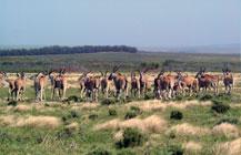 Nuwejaars Wetland SMA